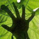 hand-silhouette-leaf900